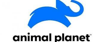 Fixer in Argentina Animal Planet